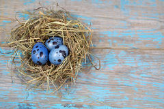Easter decorations. Eggs in nests on wood Royalty Free Stock Photography