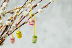 Easter decorations on pussy willow. Copy space Royalty Free Stock Image