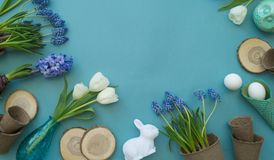 Easter decorative composition on a blue background. White tulips, flower pots, unpainted eggs and a tree. Easter decorative composition on a blue background Royalty Free Stock Photography