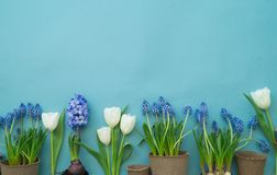 Easter decorative composition on a blue background. White rabbit, tulips, flower pots, unpainted eggs and a tree. View from above. Cozy composition. Easter Royalty Free Stock Photography