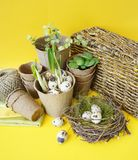 Easter decorative composition on a yellow background.Nest with quail eggs. Stock Photo