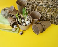 Easter decorative composition on a yellow background.Nest with quail eggs. royalty free stock image