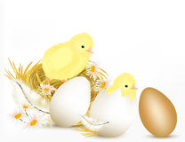 Easter design background with pair of cute chicken, eggs and chamomiles stock illustration