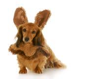 Easter dog Royalty Free Stock Image