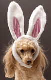 Easter Dog Royalty Free Stock Photos