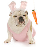 Easter dog Royalty Free Stock Photography