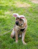 Easter dog Stock Photos