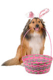Easter dog 2 stock photo