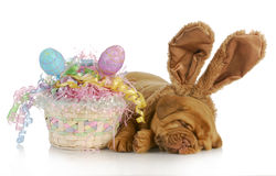 Easter dog Stock Image
