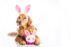 Easter Dog Royalty Free Stock Image