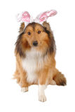 Easter dog Stock Photo