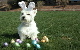 The Easter Dog Royalty Free Stock Photos