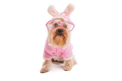 Easter dog. Stock Images