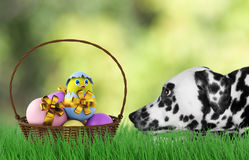 Easter dog with eggs in basket. Cute Easter dog with eggs in basket stock photo