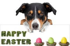 Easter dog with easter eggs holding a placard from behind, happy easter since vector illustration