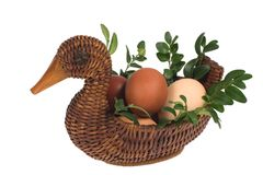 Easter duck  with eggs on white background. Easter duck wiyh eggs and green twigs  on white bacground Stock Image