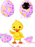 Easter duckling Stock Images