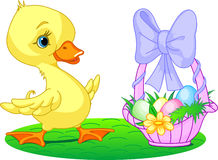 Easter duckling Royalty Free Stock Photo