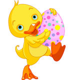 Easter Duckling Carry Egg Stock Photography