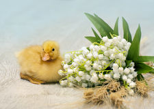 Easter duckling Royalty Free Stock Photography