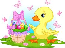 Easter Duckling With A Basket Of Eggs Royalty Free Stock Photography