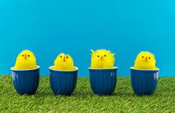 Easter ducks in blue cups Stock Images