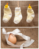 Easter egg. Chicks in socks look at Easter egg in a bow Stock Image