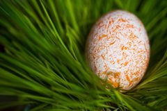 Easter egg. On the grass Stock Photo