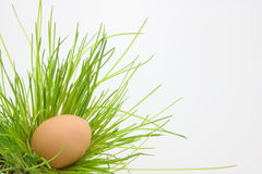 Easter Egg. In grass on white background Royalty Free Stock Photography