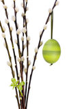 Easter egg. A green decorated easter egg handing on a branch of catkins with a green sprout Royalty Free Stock Photography