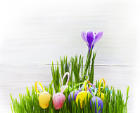 Easter Egg background wooden card spring flower grass Stock Photos