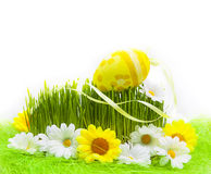 Easter Egg background wooden card spring flower grass Stock Images