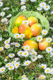Easter Egg in Basket with Flowers Royalty Free Stock Photo