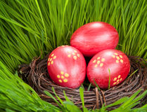 Easter egg in basket on spring green grass. Royalty Free Stock Photo