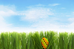 Easter egg behind grass Stock Image