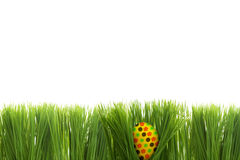 Easter egg behind grass isolated Royalty Free Stock Images