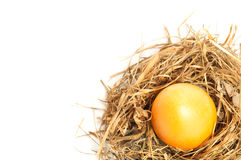 Easter egg in bird nest Stock Photos