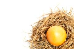 Easter egg in bird nest Stock Photos