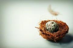 Easter egg in birds nest Royalty Free Stock Photo