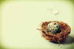 Easter egg in birds nest Royalty Free Stock Images