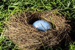 Easter Egg in Birds Nest Stock Image