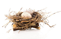 Easter egg in birds nest Royalty Free Stock Photography