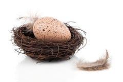 Easter egg in birds nest Stock Photo