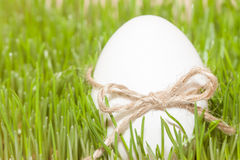 Easter egg with bowknot in grass. Easter egg with bowknot in green spring grass stock image