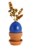 Easter egg with branch of dried basil. Decorative blue Easter egg with branch of dried basil (Ocimum Basilicum) in handmade terracotta pot, isolated on white Royalty Free Stock Photos
