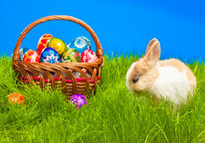 Easter egg and bunny in basket Royalty Free Stock Photo