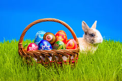 Easter egg and bunny in basket Royalty Free Stock Images