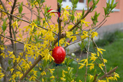 Easter egg on a bush II. Stock Image