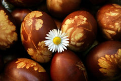 Easter egg with chamomile Royalty Free Stock Photography