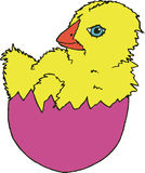 Easter Egg Chick. Cute, blue-eyed fuzzy yellow baby chicken popping out of pink Easter egg Stock Image